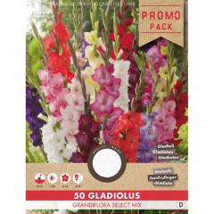 Cibule - Mečík (Gladiolus) ´LARGE FLOWERED MIX´ 50ks v balení